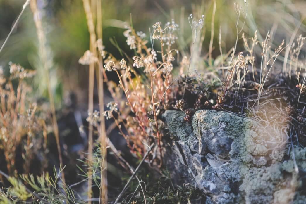 Předsvatební focení - Nad Prokopským údolím